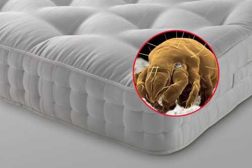 знаешь ли ты, что происходит с мозгом во время сна